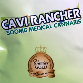 Cavi Rancher - Candy - Caviar Gold